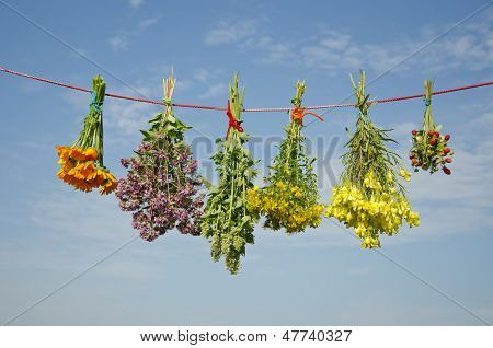 Six Various Medical Herbs Bunches On Clothes String