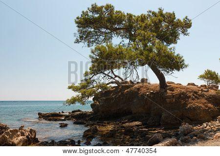 Baum auf felsigen Küste.