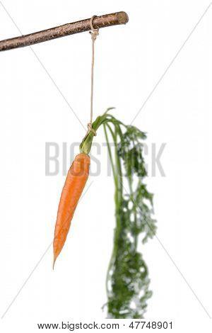 Karotte am Stiel. frisches Obst und Gemüse sind immer gesund. symbolische Foto für die Motivation.