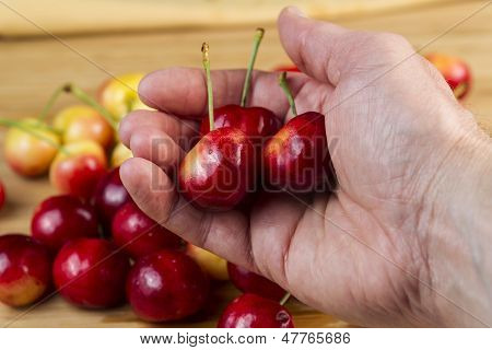 Cherries In Hand