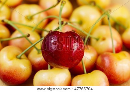 Single Large Red Cherry