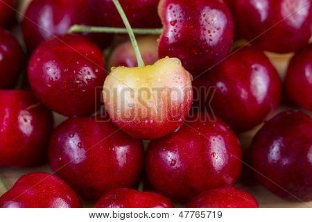 Single Large Yellow Cherry