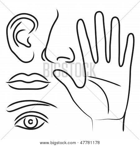 Sensory Organs Hand, Nose, Ear, Mouth And Eye