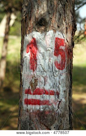 Taged Tree