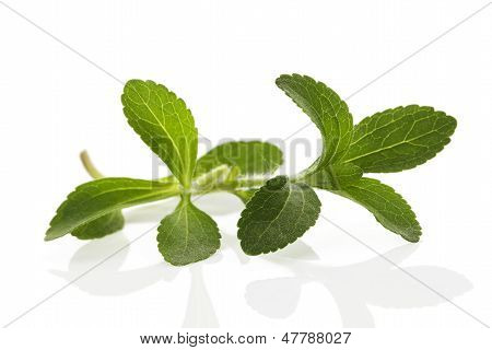 Stevia Leaves Isolated On White.
