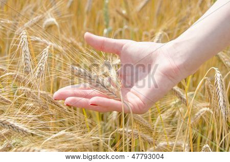 A Woman Holding Wheat