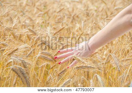 A Woman Touching Wheat