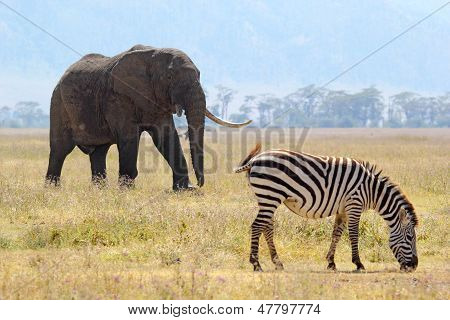 African Elephant And Zebra