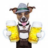 stock photo of pretzels  - oktoberfest dog with two beer mugs smiling happy - JPG
