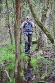 stock photo of boggy  - hiker in the  boggy forest walking with poles - JPG