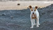 foto of stray dog  - homeless dog waiting something in a slag