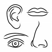 picture of sensory perception  - Vector illustration nose ear mouth and eye  isolated on white background - JPG