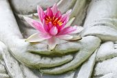 stock photo of buddha  - Buddha hands holding flower - JPG