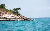 picture of promontory  - rock promontory and tree with moss in the sea - JPG