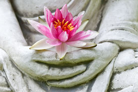 pic of wise  - Buddha hands holding flower - JPG