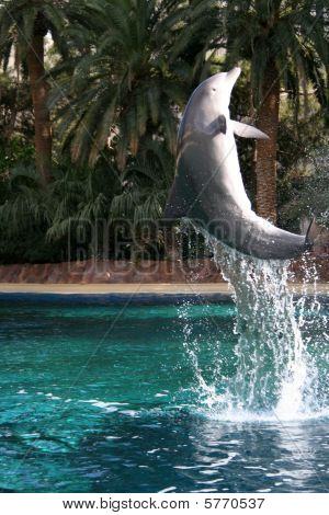 Dolphin in Flight
