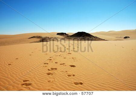 Camel Tracks