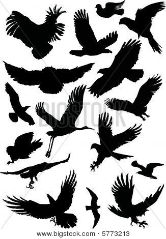 Black Flight Birds