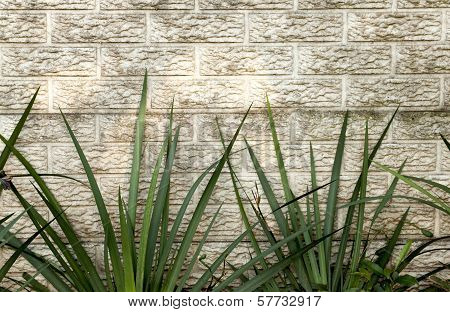 Green Iris Leaves Against Precast Concrete Wall