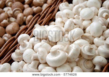 Mushrooms In Baskets