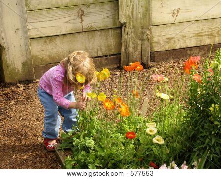 Kleine Mädchen riechen Blumen