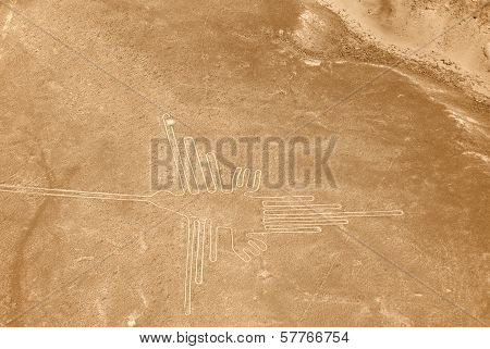 Hummingbird of the Nazca Lines