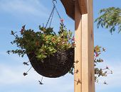 stock photo of pergola  - Hanging basket with flowers on wooden pergola - JPG