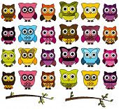 foto of owl eyes  - Doodle Style Vector Set of Cute Owls and Branches - JPG