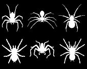 picture of black widow spider  - White  silhouettes of spiders on black background - JPG