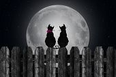 silhouette of cats in moonlight