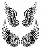 pic of spread wings  - fully editable vector illustration of spread wing set - JPG
