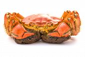 pic of cooked crab  - fresh cooked crab on a white background - JPG