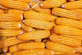 stock photo of corn cob close-up  - Close up golden dired corn cob background - JPG