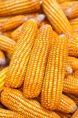 foto of corn cob close-up  - Close up golden dired corn cob background - JPG