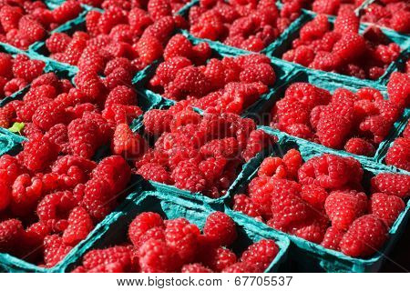 Baskets of Bright Red Raspberries at the Farmers Market