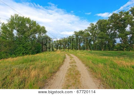 Landscape with rut road in summer forest