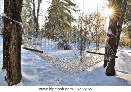 Winter Hammock