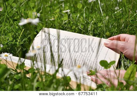 Reading On A Meadow