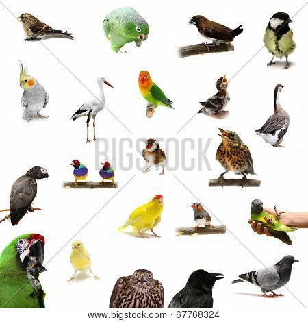 Group of birds on white