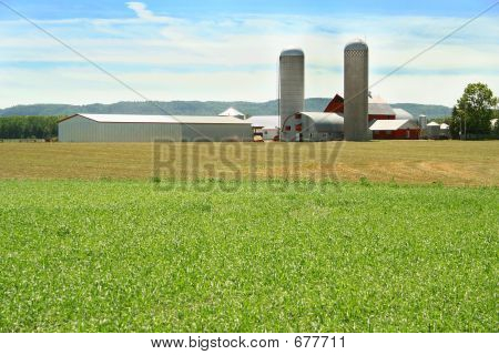 Green Field And Farm