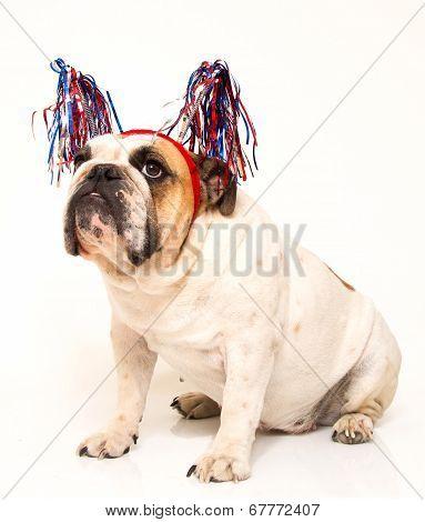 Bulldog dressed in streamer hat
