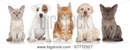 Group Of Small Kitten And Puppies
