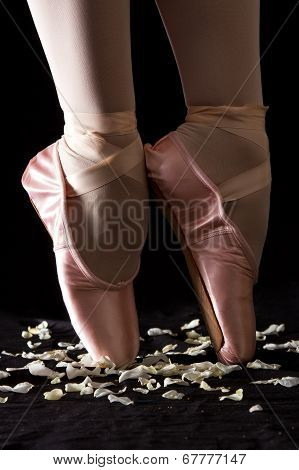A Ballet Dancer Standing On Toes On Rose Petals With Black Background Artistic Conversion