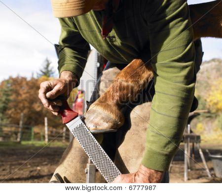 Farrier Filing Horse Hoof