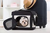 stock photo of maltese  - Small dog maltese sitting in his transporter or bag and waiting for a trip - JPG