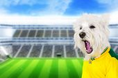 stock photo of west highland white terrier  - Brazilian west highland white terrier screaming goal at stadium - JPG