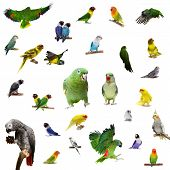 foto of parakeet  - Set parrots and parakeets isolated on white - JPG