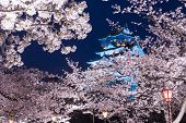 stock photo of night-blooming  - Osaka - JPG