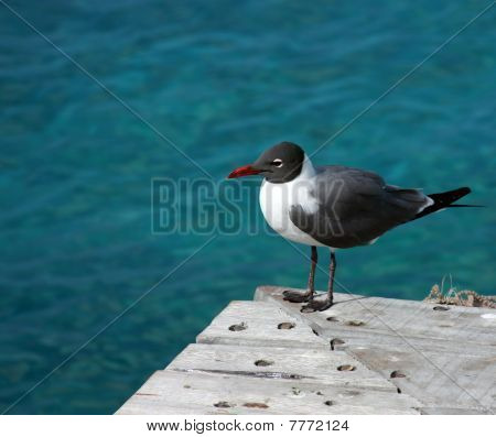 Seagull On An Ocean Dock