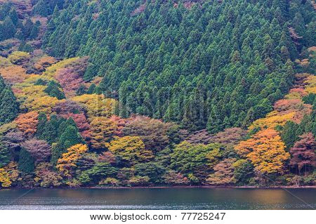 Beautiful Landscape Of Autumn Leaves Colors.